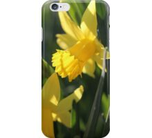 Daffodils in the sun and grass iPhone Case/Skin