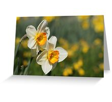 Poet's Daffodils Greeting Card