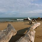 Driftwood on the Beach by Paul Wolf