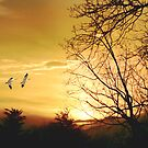 SNOW GEESE AT SUNSET by TOM YORK