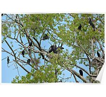 Cormorants on their nest with chicks  Poster
