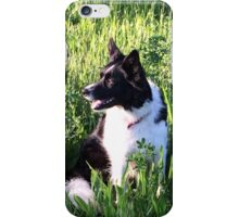 Border Collie iPhone Case/Skin