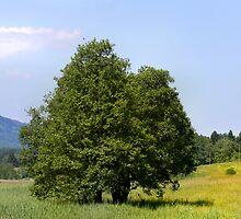 Murnau Moos Tree Pillow by SmoothBreeze7