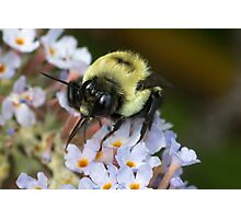 Bumble Tongue Photographic Print