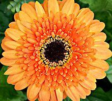 Orange is my Favorite Color by Scott Mitchell