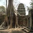 Ta Prohm, Tree #1 by Nicolas Noyes
