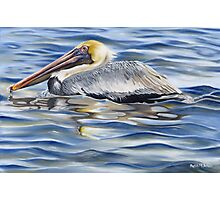 Cedar Point Pelican Photographic Print