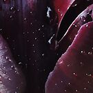 raindrops on Tulips by neon-gobi