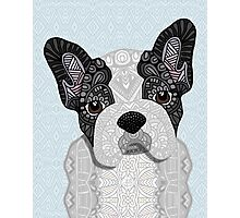 Black and white Frenchie 001 Photographic Print