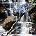 Somersby Falls Log in colour by Chris Allen