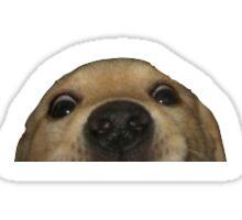 Dog's face Sticker