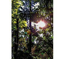 Late afternoon in the forest. Photographic Print