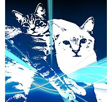 Electric Kittens Photographic Print