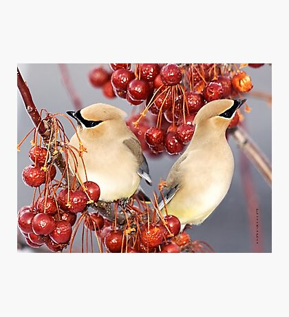 Feathers and Cherries Photographic Print