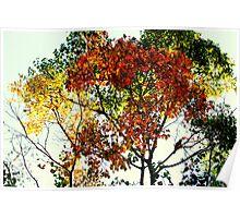 An Autumn Sonata Poster