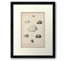 Proceedings of the Zoological Society of London 1848 - 1860 V5 Mollusca 043 Framed Print