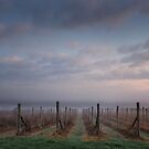 Morning in the Yarra Valley by Peter Hammer