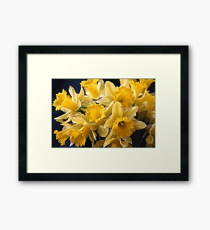 Bouquet of Bright Yellow Daffodils Framed Print