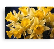 Bouquet of Bright Yellow Daffodils Canvas Print
