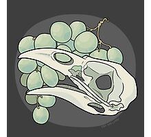 Crow & Grapes Photographic Print