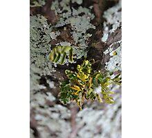Parasite Plant Photographic Print