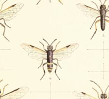 Aid to the identification of insects Charles Owen Waterhouse 1890 V1 V2 155 Various Sticker