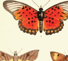 Aid to the identification of insects Charles Owen Waterhouse 1890 V1 V2 149 Various Sticker