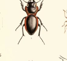 Aid to the identification of insects Charles Owen Waterhouse 1890 V1 V2 128 Various Sticker