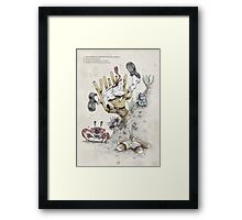 Real Life SpongeBob - Natural History Variant Framed Print