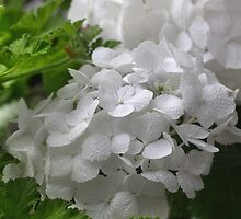 White Hydrangea Pillow by SmoothBreeze7