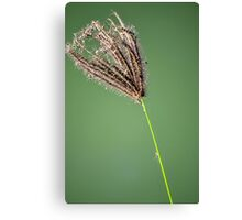 Lonely grass flower Canvas Print