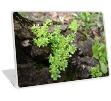 Parasite Plant Laptop Skin