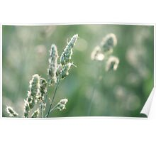 Sunset on Orchard Grass Poster