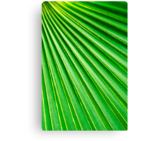 Abstract Palm Fan Canvas Print