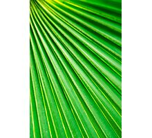 Abstract Palm Fan Photographic Print