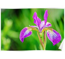 Poetic Purple Flower Poster