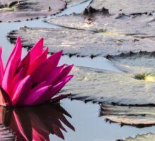 Reflection of Lotus Sticker