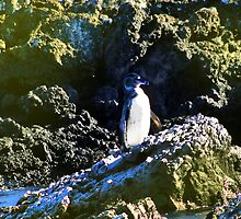 Penguin Near Isabela In The Galapagos Islands by Al Bourassa