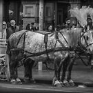 Carriage Horses by Bette Devine