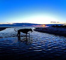 I love Lucy the greyhound by loza1976