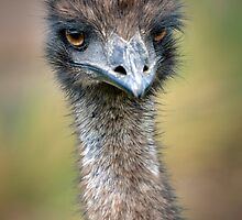 emu by Glenda Williams