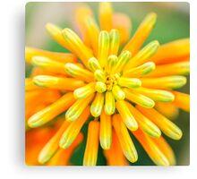 Atom Orange Flower Canvas Print