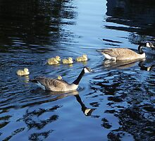 Family Outing by Martha Medford