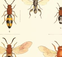 Aid to the identification of insects Charles Owen Waterhouse 1890 V1 V2 168 Various Sticker
