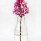 Tiny Vase by Dave Hare
