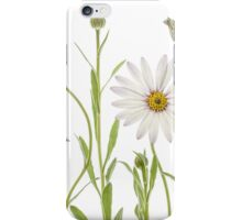 Cape Daisies iPhone Case/Skin