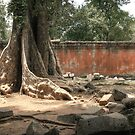 Ta Prohm, Tree #2 by Nicolas Noyes