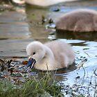 Little one by GreyFeatherPhot