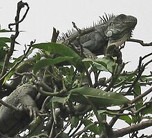 IQUANA'S MUNCHING ON TREE LEAVES-PLAZA MAJOR-LIMA by JAYMILO