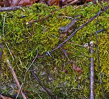 Moss and barbed wire by Carolyn Clark
